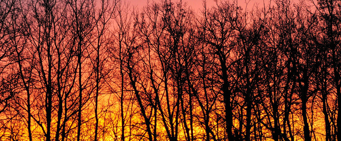 Morning light at our farm in Saskatchewan Canada Tree Sunset Forest Orange Color WoodLand Tree Canopy  Silhouette Bare Tree Autumn Scenics - Nature Sunset Beauty In Nature Tree