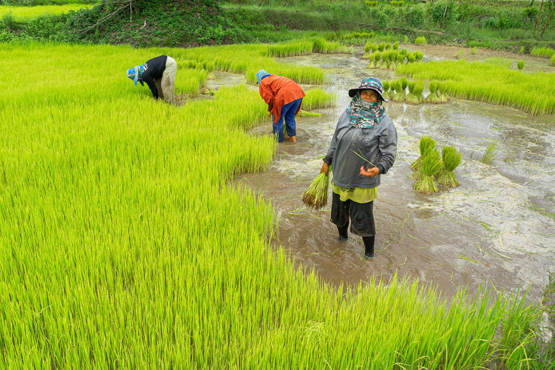 People working on agricultural field
