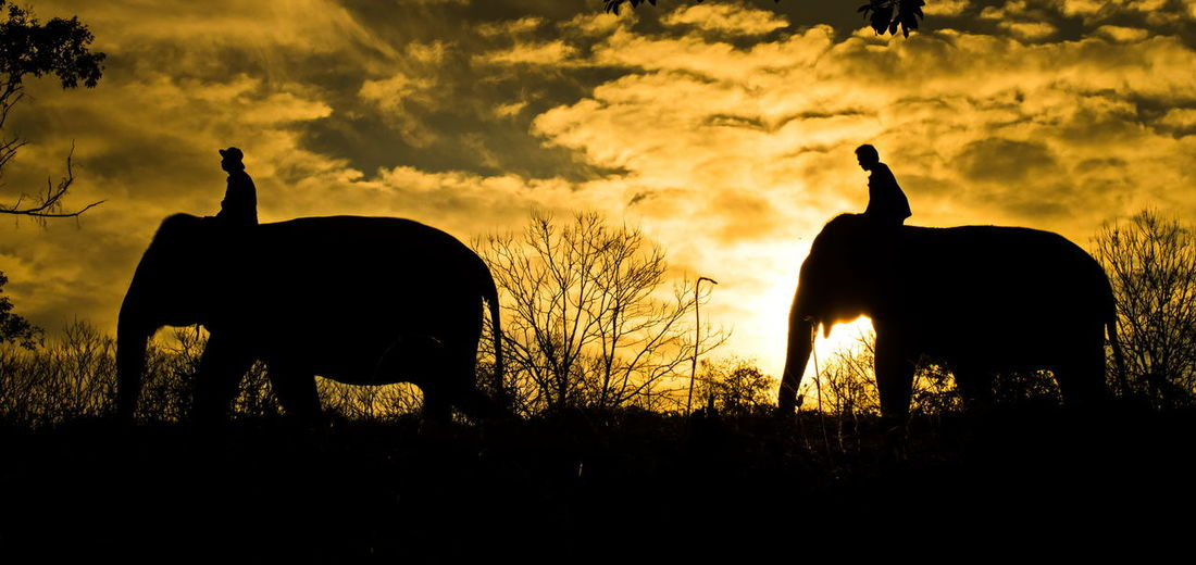Elephent Animal Animal Themes Animal Wildlife Animals In The Wild Beauty In Nature Cloud - Sky Domestic Animals Field Group Of Animals Herbivorous Land Mammal Nature No People Outdoors Plant Silhouette Sky Sunset Tree Two Animals Vertebrate