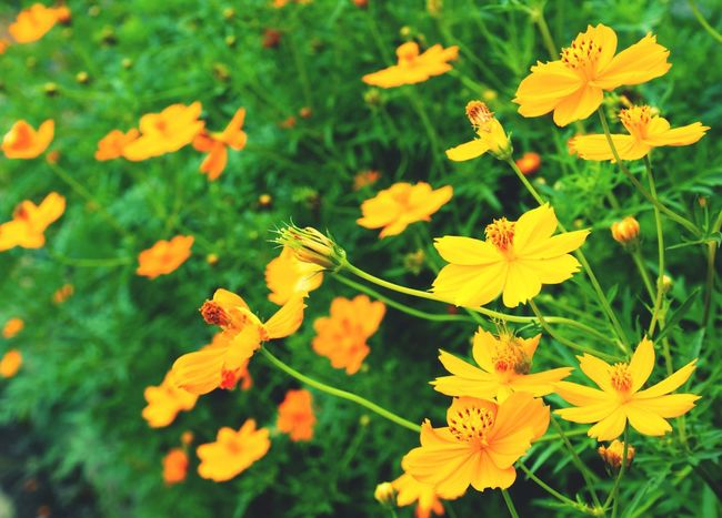 Flower Growth Petal Nature Plant Fragility Beauty In Nature Yellow Freshness Flower Head Blooming No People Outdoors Field Day Barometer Close-up