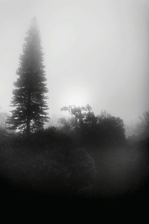 Shades Of Grey Beautiful foggy day 🗻📷 EyeEm Best Shots EyeEm Best Shots - Black + White The Moment - 2015 EyeEmAwards The Great Outdoors - 2015 EyeEm Awards The Traveler - 2015 EyeEm Awards The Photojournalist - 2015 Eyeem Awar The Adventurer - 2015 EyeEm Awards Nikon Lovephotography