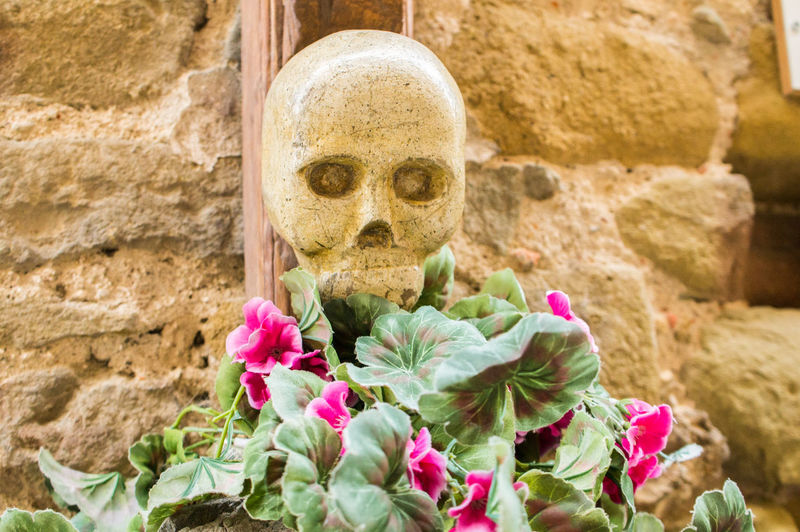 Nature Plants Summer Italy Tuscany Flower Flowering Plant Plant Representation Close-up No People Solid Human Representation Day Creativity Pink Color Human Skeleton Bone  Rock Freshness Architecture Art And Craft Rock - Object Outdoors Skull