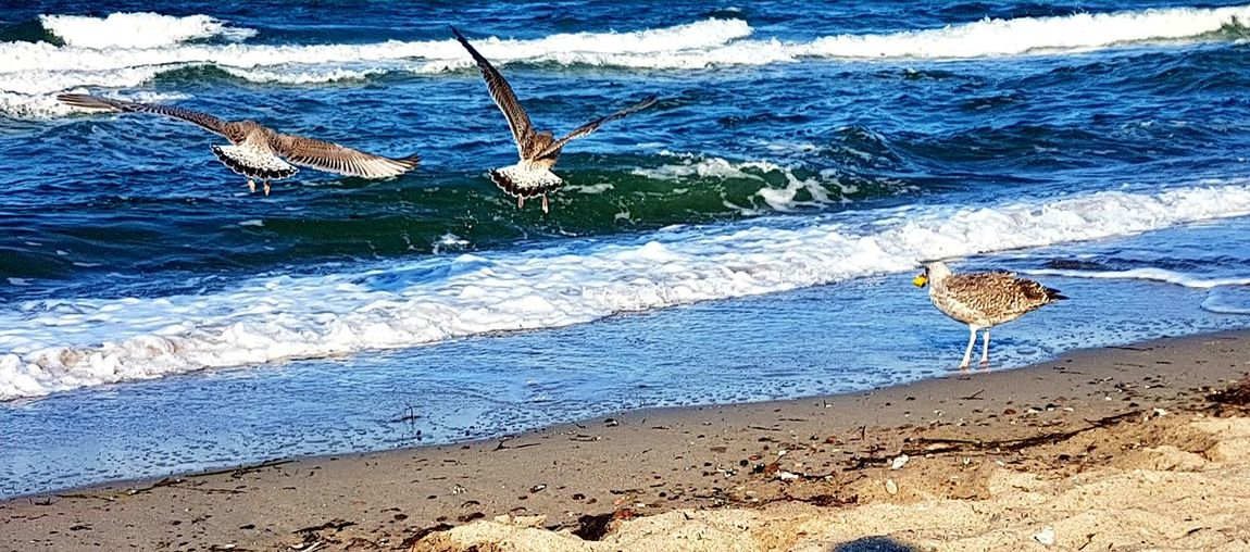 Seagulls In Flight Day Water Outdoors Beach Nature Sand No People Sea Waves Vacations Travel Destinations Outdoors Photograpghy  Scenics Waves, Ocean, Nature Wind Is Changing