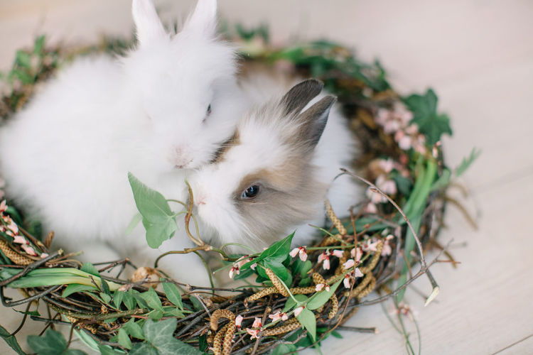 Celebration Easter Family Rabbits Animal Themes Close-up Day Decoration Domestic Animals Feline Flower Freshness Green Color High Angle View Indoors  Leaf Mammal Nature Nest No People One Animal Pets