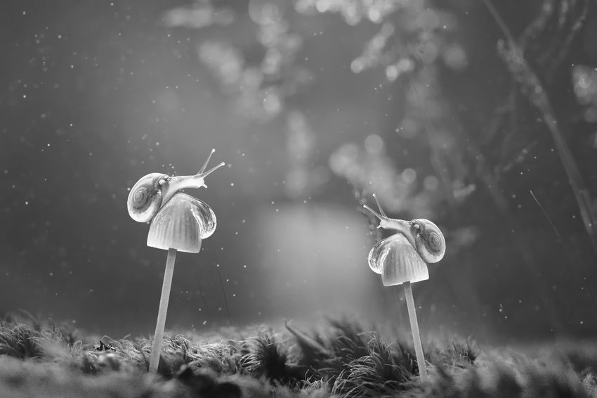 Sanil BW_photography Macro Photography Snail Beauty In Nature Close-up Day Flower Head Fragility Freshness Fungus Grass Growth Mushroom Nature No People Outdoors Snail Photography Snails Snail🐌 Toadstool