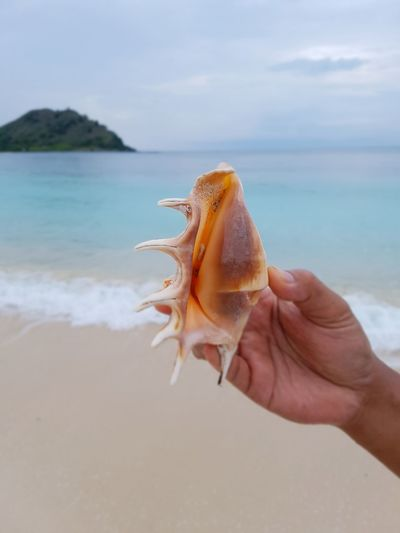 Close-Up Of Hand Holding Conch Shell At Beach Against Sky