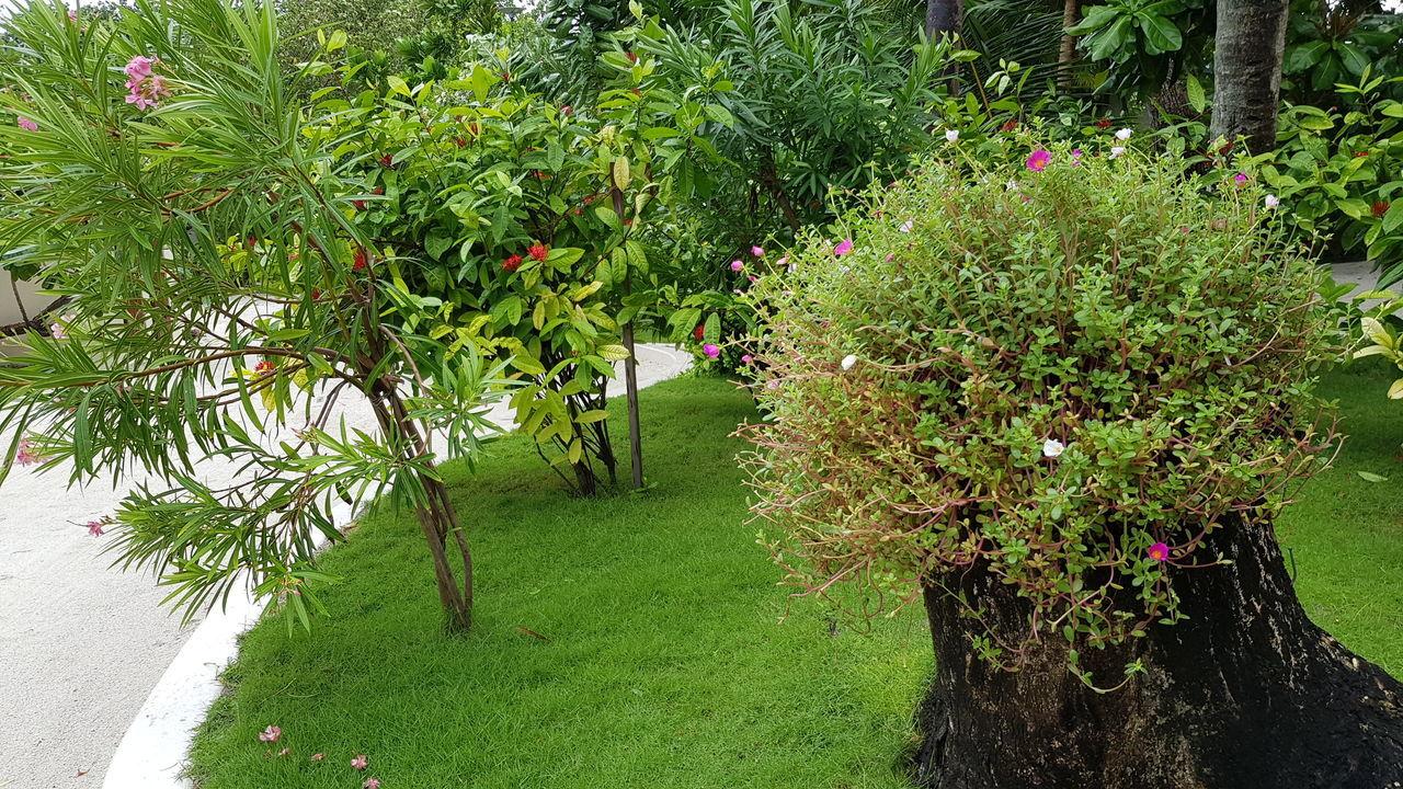 FLOWERING PLANTS IN GARDEN