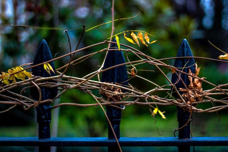 Winter Colour Plant Focus On Foreground No People Nature Tree Close-up Growth Plant Part Outdoors Leaf Day Beauty In Nature Branch Green Color Tranquility Sunlight Freshness Selective Focus Boundary Dry