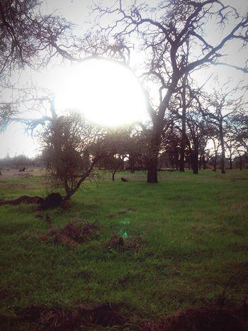 Nature Nature Trees Grass Chico Bidwell Park