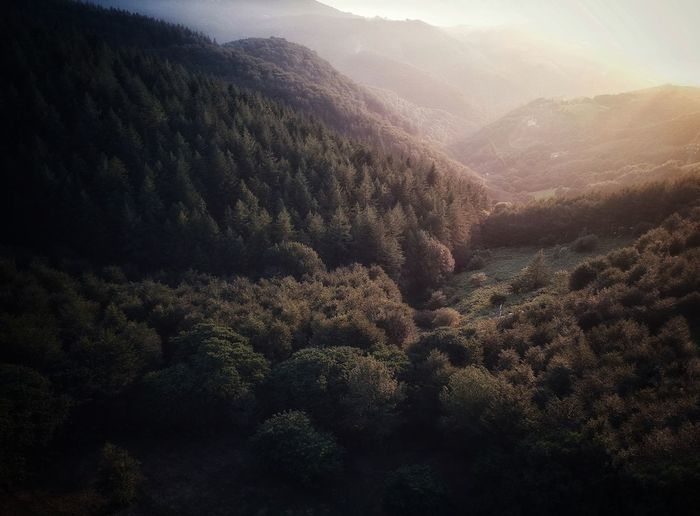 Gure basterrak Forest Forest Photography Dji Dji Spark DJI X Eyeem Drone  Dronephotography Nature No People Sunset Nature Photography Mountain Mountains Travel Travel Destinations Tree Mountain Winter Forest Fog Pine Tree Cold Temperature Pinaceae Spruce Tree WoodLand Valley Mountain Ridge Pine Wood Pine Woodland Treetop