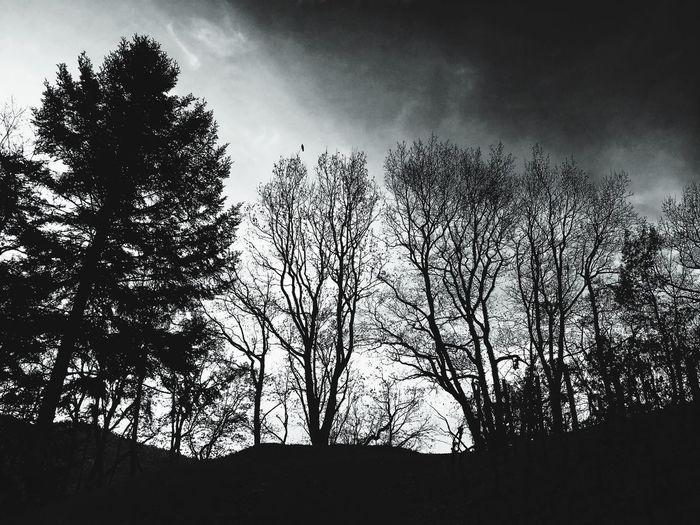 Tree Sky Nature Silhouette No People Outdoors Cloud - Sky Waldkirch Knittikus One Animal Drama crow
