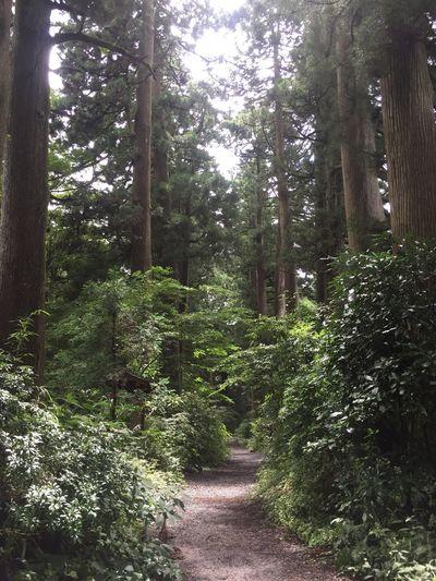 Cedar Forest Nature Green