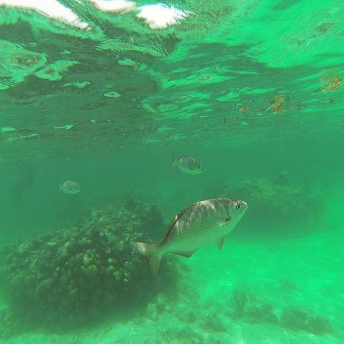 Snorkeling in Akumal Snorkel Fish Mexico Akumal