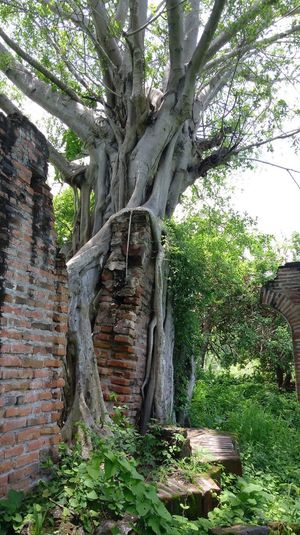 😍😍 Beautifulplace Tree Green Wall Nature Perfect Wildlife Finally