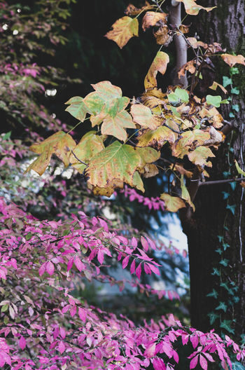 seasons and colors Plant Beauty In Nature Plant Part Growth Leaf Flowering Plant Flower Nature Focus On Foreground Day No People Close-up Vulnerability  Freshness Fragility Pink Color Outdoors Tree Selective Focus Purple