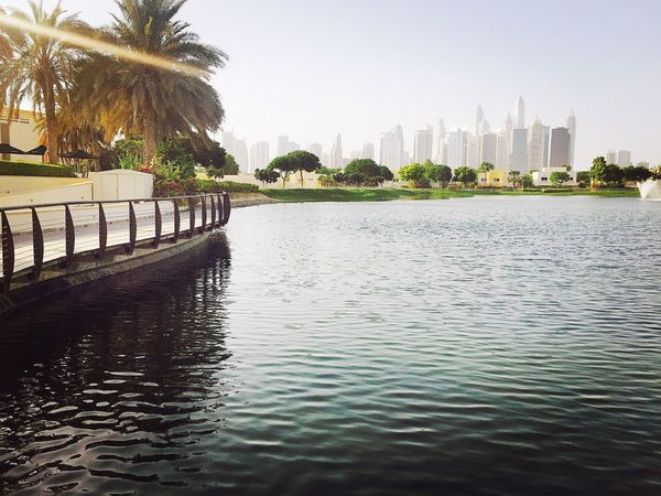 Dubaimeadows Dubai Canal Walks Palm Tree Waterfront