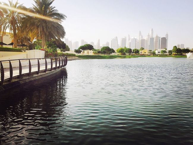 Dubaimeadows Dubai Canal Walks Palm Tree Waterfront