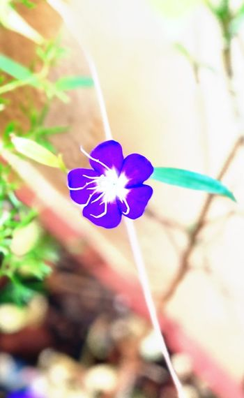 Flower Fragility Growth Petal Nature Beauty In Nature Plant