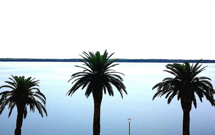 Miami...o..?!? Quadronatural Laguna Di Orbetello Tree Palm Tree Sea Clear Sky Water Silhouette Sky Horizon Over Water Tropical Tree
