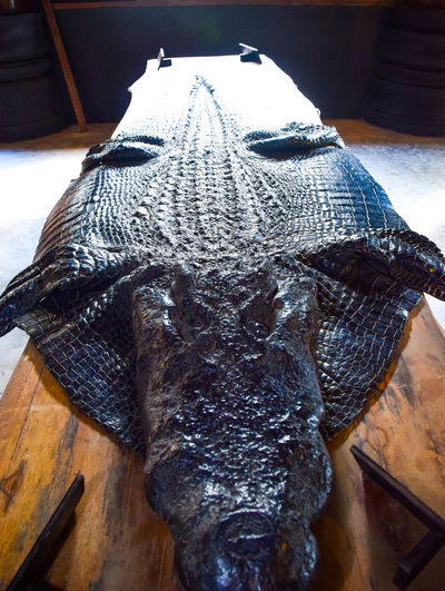จรเข้ Animal Animal Body Part Animal Head  Animal Mouth Close-up Flooring High Angle View Mammal No People One Animal Vertebrate จระเข้ ซากสัตว์ โบราณ โบราณสถาน
