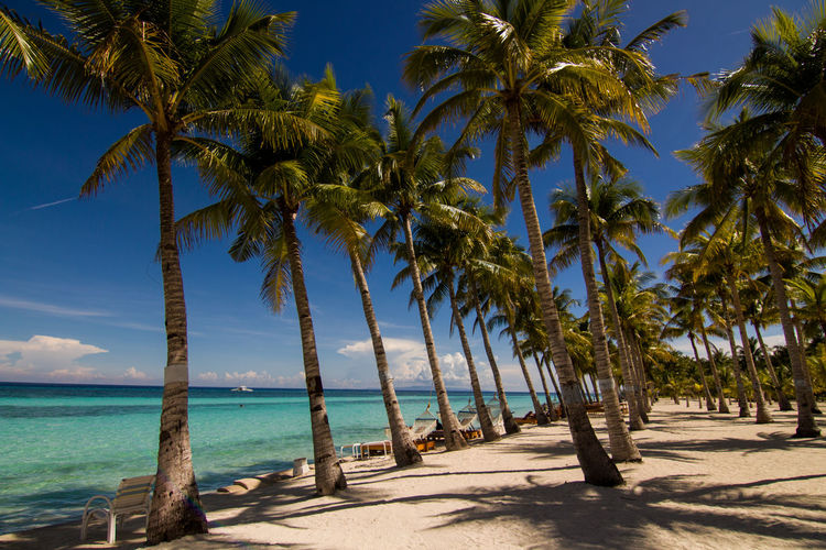 Beach Beauty In Nature Blue Day Horizon Over Water Landscape Nature No People Outdoors Palm Tree Phillipines Sand Scenics Sea Sky Summer Sunlight Tourism Tranquility Travel Travel Destinations Tree Tropical Climate Vacations Water Traveling Home For The Holidays EyeEmNewHere