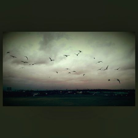 Wintertime Greatestfeeling Feedingbirds :') Hangingoutwithfamily Landscapes With WhiteWall