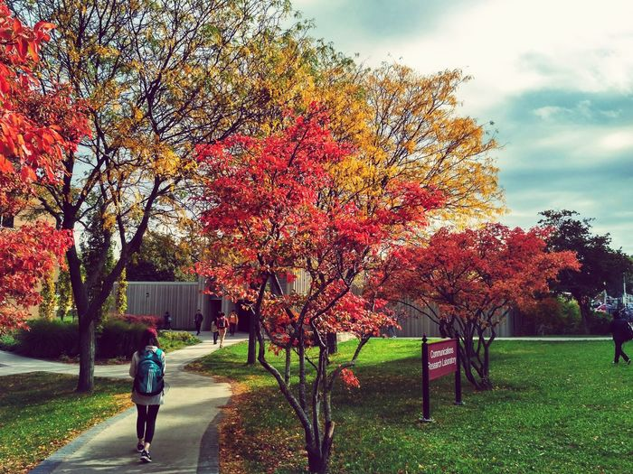 campus, university Tree Bicycle Growth Autumn One Person Outdoors Day Nature Men Full Length Real People People Adult Grass Sky Only Men Architecture One Man Only Adults Only