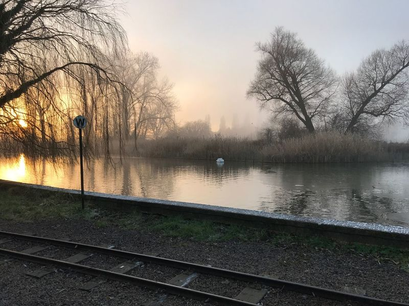 Water Tree Reflection Lake Scenics Beauty In Nature No People Outdoors Tranquil Scene Swan Foggy Morning Fog Foggy Tranquility Foggy Weather Poor Visibility Train Tracks