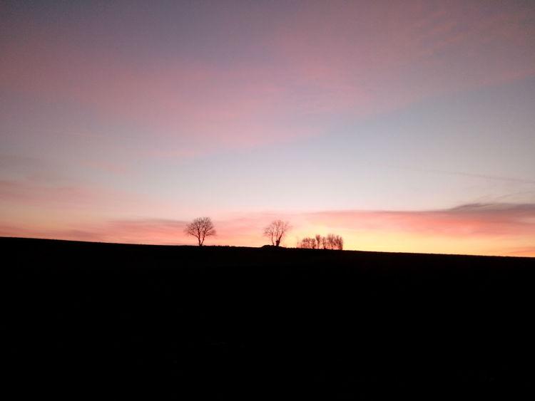 Tree Sunset Astronomy Rural Scene Silhouette Field Horizon Over Land Dusk Sky Landscape