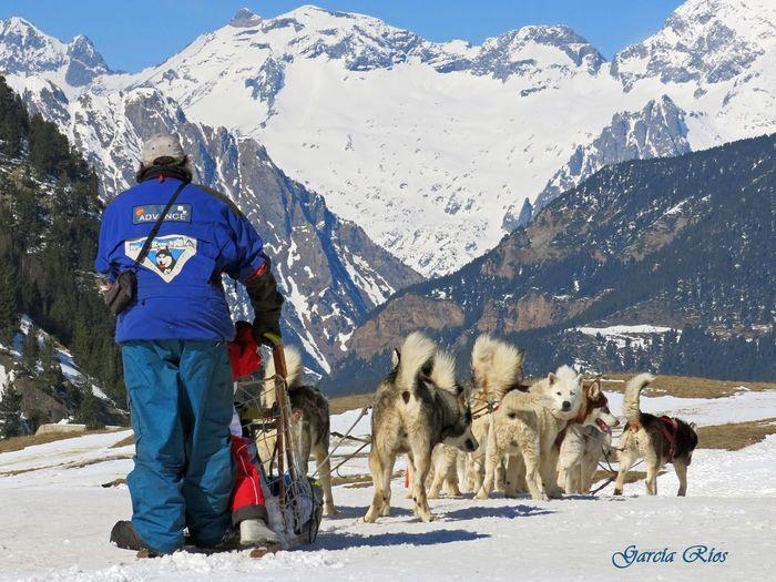 Winter Europe Europa Spain♥ España🇪🇸 SPAIN Manu García Canonphotography Canon Manugarcía Naturaleza Nieve Snow Snow ❄ Nature Perros❤ Perros  Dogs Trineo Cerler
