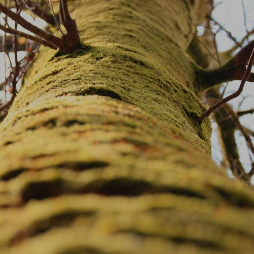 Arbol Close-up