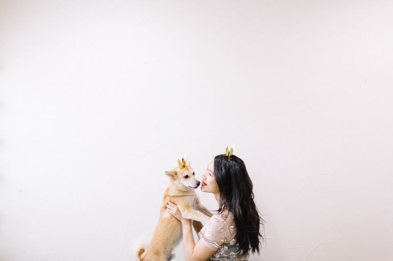EyeEm Ready   EyeEm Selects Pets Togetherness White Background Domestic Animals Shiba Inu Festive Mood Dogs Of EyeEm Winter Holidays December January Family Time New Years Eve New Years Day Friendship Best Friend Happiness Gold Crown Festive Season Celebration Event Hat Celebrating A new year with my shiba Inu!
