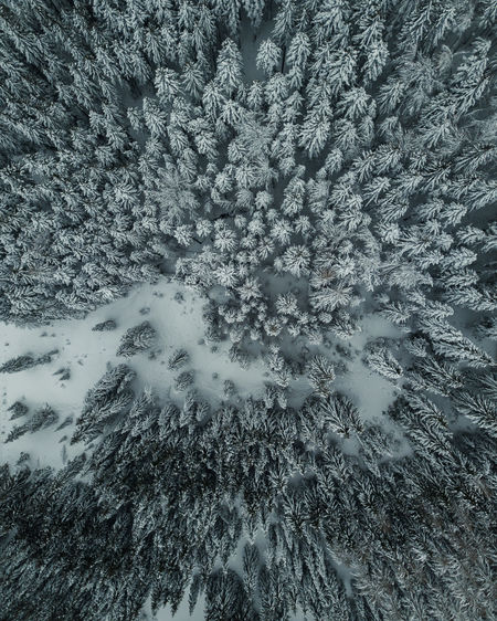 Full frame shot of snow covered trees on field