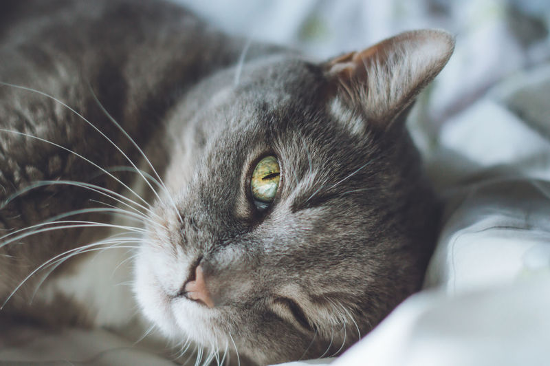 Close-up portrait of cat lying on bed