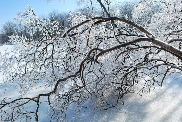 Winter Storm Bare Tree Beauty In Nature Branch Cold Temperature Day Frozen Ice Ice Storm Icy Branch Icy Trees Nature Outdoors Sky Snow Tree Winter Lost In The Landscape Perspectives On Nature