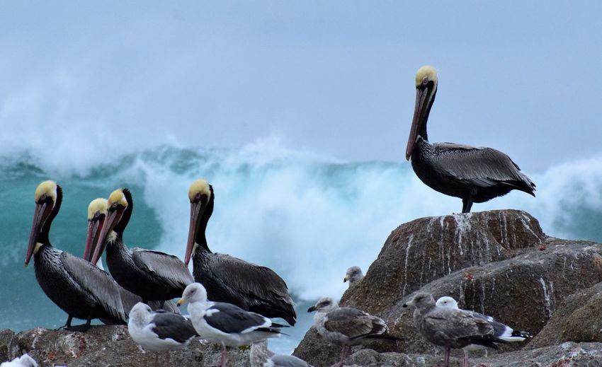 Pelicans on beach against sky