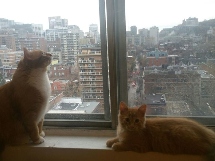 Two cats by the