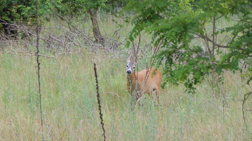 Animals Beauty In Nature Deer Forest Grass Nature Outdoors Tree