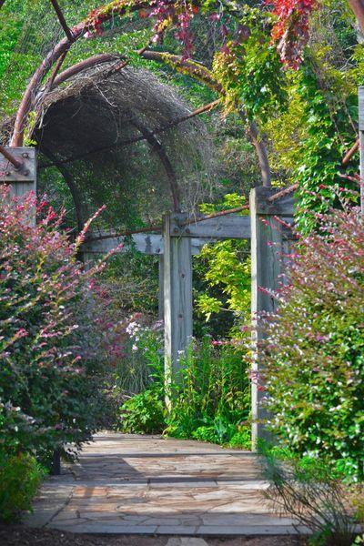 Plant Nature Ivy Outdoors Nikon D5200 Flower