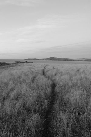 Beauty In Nature Black Black And White Blackandwhite Day Field Grass Growth Landscape Marram Grass Nature No People Outdoors Scenics Sky Tall Grass Timothy Grass Tranquil Scene Tranquility