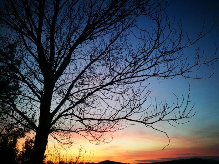 Sky Tree Nature Silhouette Tranquility Beauty In Nature Sunset Tranquil Scene Bare Tree Landscape Dramatic Sky Blue Orange Sky Red Sky Purple Sky Sunset