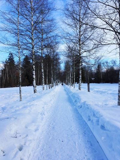 Path in Winter Pathway Path Snow Winter Cold Temperature Tree Plant The Way Forward Nature Direction Diminishing Perspective Tranquil Scene Tranquility Road Beauty In Nature