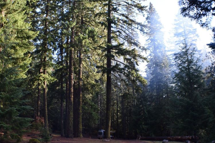 Morning shot from a camping trip. Trees Nature Growth Colors Of Autumn Campinglife Oregonexplored Oregonlife Landscape Beauty In Nature Enjoying Life My Point Of View Taking Photos Oregon Nikond3300