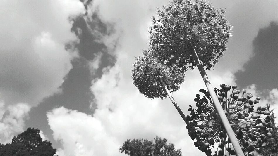 New perspectives Plants 🌱 Close-up Clouds And Sky Brunswick Braunschweig
