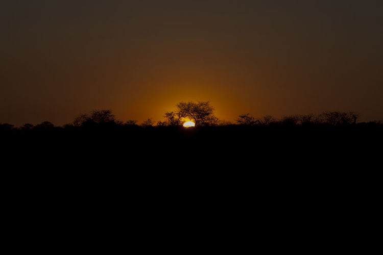 Africa Namibia Etosha National Park Landscape Sunset Sunrise Beauty In Nature Clear Sky Day Landscape Moon Nature No People Outdoors Scenics Silhouette Sky Sunset Tranquil Scene Tranquility Tree