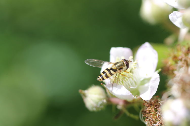 High angle view of insect on white flower outdoors