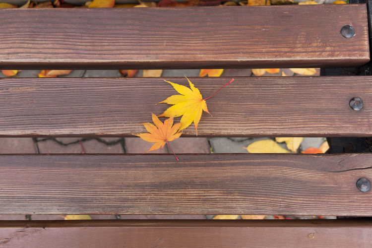 Autumn Couple Close-up Day Fall Flower Freshness Growth Leaf Nature No People Outdoors Table Wood - Material Yellow Yellow Color EyeEmNewHere