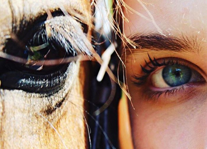 Beauty In Nature My Horse Horseeye Eyephotography Human Eye Looking At Camera First Eyeem Photo