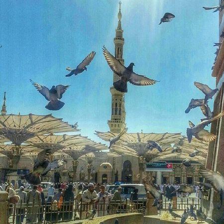 وغادرنا مدينة المصطفى محمد عليه الصﻻة والسﻻم المدينة_المنورة الى لقاء آخر باذن الله And we left Prophet Mohamed SAW Holy Mosque & city, looking for another visit in the future