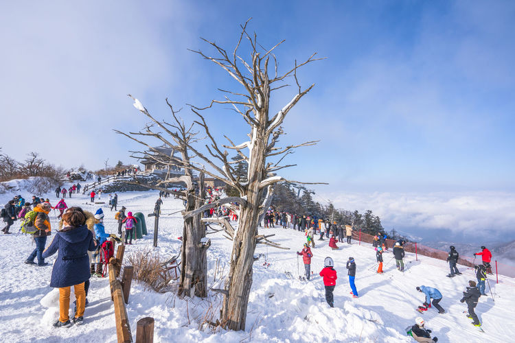 Winter of Deogyusan mountain at Muju Ski Resort in South Korea. Winter Cold Temperature Snow Group Of People Crowd Real People Large Group Of People Tree Leisure Activity Nature Women Sky Lifestyles Men Holiday Bare Tree Plant Day Enjoyment Warm Clothing Outdoors